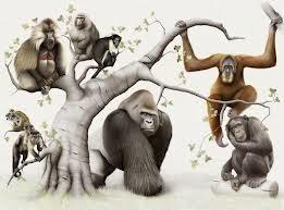 Primates-Riddle[1]